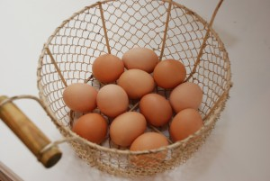 eggs_JY